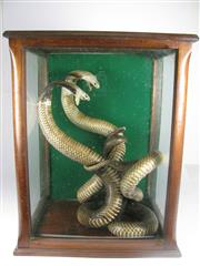 Sale 8331A - Lot 586 - Antique Pair of Taxidermy Fighting Cobras in Cedar Display Case