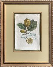 Sale 8682 - Lot 2019 - A set of (5) Antique hand-coloured engravings Botanical Studies - Limones, each 62 x 49cm (frame size)