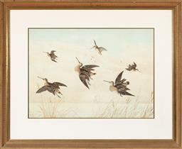 Sale 9190H - Lot 245 - Neville Cayley, snipes in flight, watercolour, signed and dated lower right, 1894, 50cm x 70cm