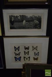 Sale 8497 - Lot 2024 - M. Hingerty (2 works), Butterfly Collection I; Waterbirds, hand-coloured etching; etching and aquatint, each editioned, 55 x 68.5cm;...