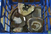 Sale 8338 - Lot 1319 - Crate Of Natural Polished Agate