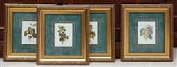 Sale 9155H - Lot 108 - A group of four fruiting vine prints in gilt frames. Frame size 28x25cm
