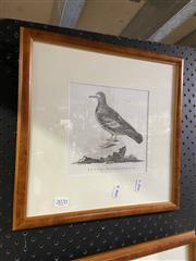Sale 8936 - Lot 2070 - John Latham, Bronze Winged Pigeon, Engraving Framed 16x16cm