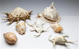 Sale 9164 - Lot 409 - Collection of shells inc large examples