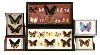 Sale 7529 - Lot 82 - Collection Of Framed Butterflys