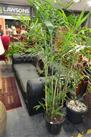 Sale 8156 - Lot 1012 - Collection of Plants