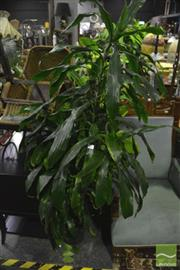 Sale 8307 - Lot 1019 - Collection of Indoor Plants