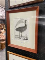 Sale 8936 - Lot 2068 - Peter Mazell, New Holland Cassowary, Engraving Framed, 25.5x19