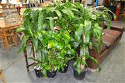 Sale 8156 - Lot 1036 - Collection of Plants