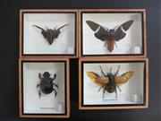Sale 8431A - Lot 674B - Insects, framed (4)