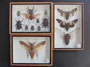 Sale 8431A - Lot 674D - Assortment of Insects, framed (3)