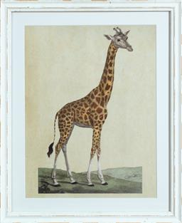 Sale 9134H - Lot 77 - A pair of framed prints of a Giraffe and Leopard, larger 50cm x 40cm