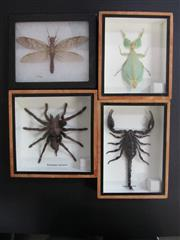 Sale 8431A - Lot 674F - Assorted Insects, framed (4)
