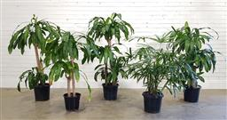 Sale 9174 - Lot 1037 - Collection of indoor plants (h157cm)