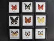Sale 8431A - Lot 674G - Assortment of Butterflies, framed (9)