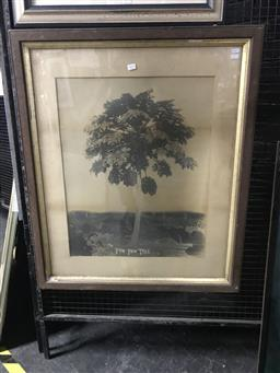 Sale 9113 - Lot 2035 - Antique Photograph of The Paw Paw Tree (frame size - 94x79cm)