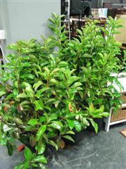 Sale 7937A - Lot 1128 - Collection Of Outdoor Plants