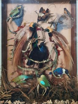 Sale 9179 - Lot 1051A - Good Late 19th/ Early 20th Century Tropical Bird Taxidermy Display in Cedar Case, the display with moulded cornice (missing back rig...