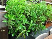 Sale 7937A - Lot 1154 - Collection Of Outdoor Plants