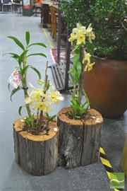 Sale 8272 - Lot 1020 - Pair of Orchids in Stumps