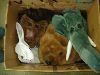 Sale 7490 - Lot 82 - 1 BOX OF ASSORTED FUR ANIMAL HEADS – incl