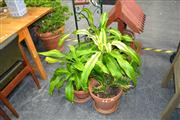 Sale 8019 - Lot 1055 - Collection of Plants