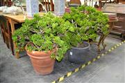 Sale 8019 - Lot 1060 - Pair of Potted Plants