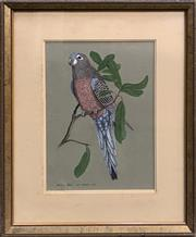Sale 8686 - Lot 2020 - Bill Howard, Bourkes Parrot, 1976, gouache, 57 x 48cm (frame size), signed and dated lower left