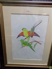 Sale 8569 - Lot 2068 - Artist Unknown - Parrots - EUTELIPSITTA CHLOROLEPIDOTA, 1945 50 x 35cm (frame size: 71 x 56cm)
