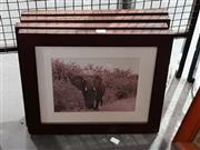Sale 8699 - Lot 2078 - 4 Framed Animal Photographs