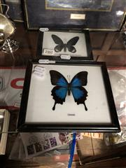 Sale 8797 - Lot 2462 - Pair of Taxidermy Butterfly Displays