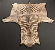 Sale 8342A - Lot 20 - A full sized Zebra pelt on felt backing, length 320cm, some abrasions commensurate with age