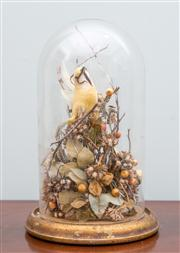 Sale 8470H - Lot 372 - A diorama of a chaffinch, under glass dome, H 30cm