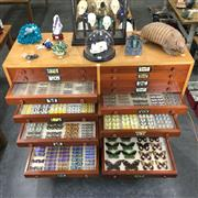 Sale 8758 - Lot 9 - Impressive & Extensive Lepidoptery / Butterfly Collection, housed in a purpose-built 28-drawer teak cabinet, primarily Australian sp...