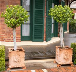 Sale 9260M - Lot 1 - A pair of standard Ficus in Victorian Gothic style terracotta planters, H 57 W 54cm