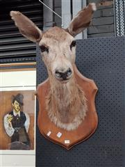 Sale 8848 - Lot 1050 - Taxidermy Mounted Doe or Young Deer Head