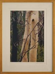 Sale 8734A - Lot 86 - Lynn Pearce - Like Porcelian, Bush Regeneration NSW 55 x 49cm (frame size)
