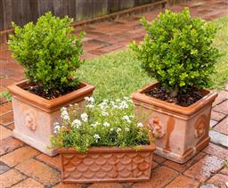 Sale 9260M - Lot 3 - Two square form terracotta pots with lion masks planted with Buxus (H 37cm x W 37cm) together with another rectangular planter