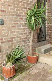 Sale 9070H - Lot 190 - Two terracotta pots planted with a large Aloe Vera plant, the other with a Yucca, Height of taller pot 35cm, Yucca Height 200cm