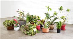 Sale 9255 - Lot 1457A - Collection of potted plants (various sizes)