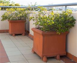 Sale 9165H - Lot 12 - A pair of square terracotta planters with gardenia. Height 48cm x Width 58cm x Depth 58cm