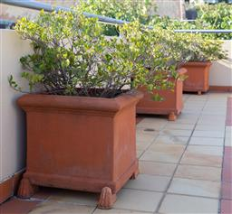 Sale 9165H - Lot 15 - A group of three terracotta square planters with gardenia. Height 48cm x Width 58cm x Depth 58cm