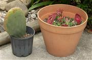 Sale 9070H - Lot 202 - A small terracotta pot planted with succulents and a potted cactus. Largest Height 33cm x Diameter 40cm