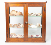 Sale 8716A - Lot 62 - A maple collectors cabinet with glazed front and glazed doors to the rear containing three shelves of collectable shells, case heigh...