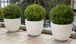 Sale 9130H - Lot 76 - A set of three cylinder pots with shaped buxus hedges, (damages) Diameter 40cm x Height 30cm