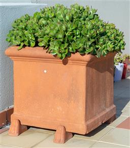 Sale 9165H - Lot 4 - A pair of terracotta square planters with succulentes. Height 48cm x Width 58cm x Depth 58cm