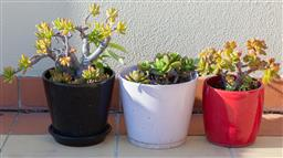 Sale 9165H - Lot 203 - A group of three small plant pots with succulentes. Height 18cm