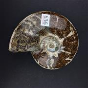 Sale 8567 - Lot 636 - Whole Cleoniceras Ammonite (Jurassic Period), Morocco - one side polished