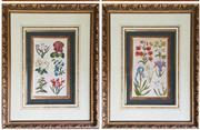 Sale 8956 - Lot 1037 - A Pair of 18th Century Dutch Handcoloured Botanical Engravings after Joseph Mulder. Overall H75 x 66cm
