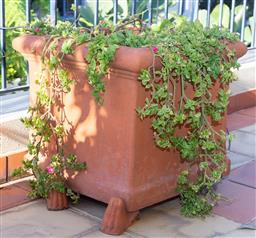 Sale 9165H - Lot 17 - A pair of square form terracotta planters one with with trailing succulents. Height 48cm x Width 58cm x Depth 58cm